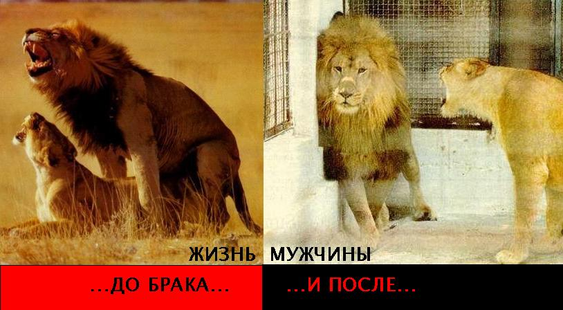 знакомства лев после
